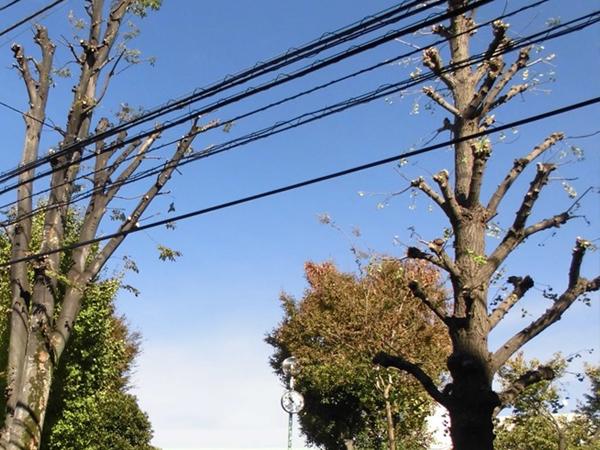 電線に枝の伐採