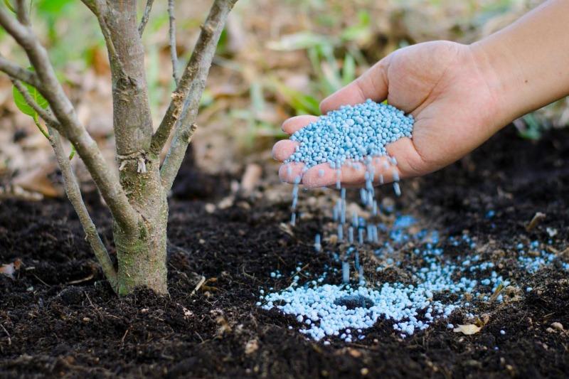 追肥 肥料